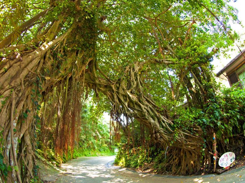 三島村の概要・観光